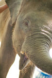 Słoń w zoo Zdjęcia Royalty Free