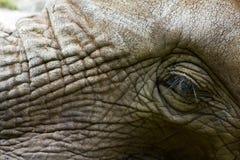 słoń wiseman Zdjęcie Stock