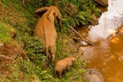 Słoń z dzieckiem w Afryka natury dzikim życiu Zdjęcia Stock