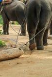 Słoń, zwierzę Zdjęcia Stock