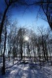 słońc drzewa Obrazy Royalty Free