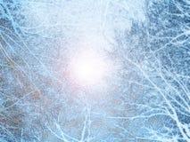 słońc drzewa Obrazy Stock