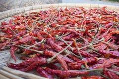 Słońc Wysuszeni Czerwoni Tajlandzcy Chilies Fotografia Royalty Free