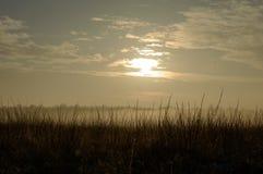 Słońca łamania synklina i depresji mgła nad traw roślinami Zdjęcie Royalty Free