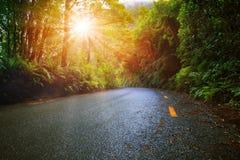 Słońca światło w wilgotnościowym halnym las tropikalny perspektywy asfalcie r obraz stock