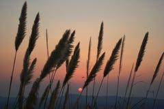 Słońca, góry i trawy kwiaty w wieczór, fotografia stock