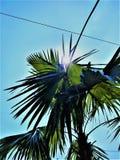 Słońca i drzew spojrzenie z klasą wpólnie zdjęcie stock