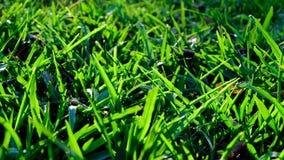 Słońca jaśnienie na ostrzach trawa Fotografia Royalty Free