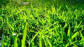 Słońca jaśnienie na ostrzach trawa zdjęcie royalty free