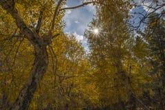 Słońca jaśnienie od gałąź w jesieni Obraz Stock