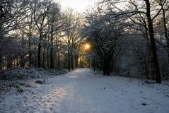 Słońca jaśnienie przez bezlistnej warkocz zimy wschodu słońca śnieżnego zmierzchu zdjęcie royalty free