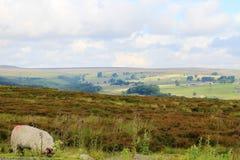 Słońca jaśnienie przez chmur na polach, North Yorkshire obraz stock
