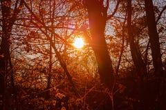 Słońca jaśnienie przez drzew na jesień dniu obraz stock