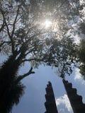 Słońca jaśnienie przez starego bukowego drzewa obrazy stock