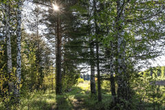 Słońca jaśnienie przez zieleń liści i gałąź Zdjęcie Royalty Free