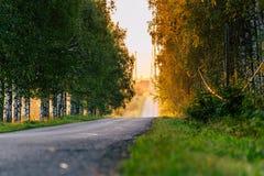 Słońca jaśnienie przy końcówką droga z brzozy aleją Oprócz go zdjęcie royalty free