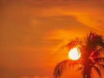 Słońca kokosowego drzewa ustalona sylwetka Obraz Stock