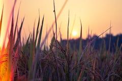 Słońca położenie za trawy i banatki gospodarstwem rolnym obraz royalty free