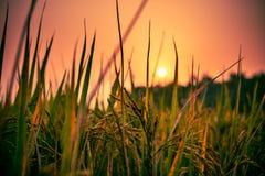 Słońca położenie za trawy i banatki gospodarstwem rolnym fotografia royalty free