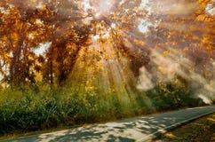 Słońca promienia światło przy Jesień lasem Fotografia Stock