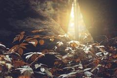 Słońca przebijanie przez pęknięć skały, jesień Zdjęcia Royalty Free
