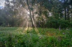 Słońca ` s promienie przez mgły w lesie Obrazy Stock