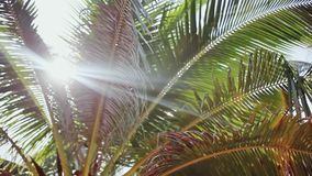 Słońca ` s promienie robią ich sposobowi przez liści drzewko palmowe Obiektywu racy skutek 1920x1080 zbiory