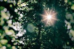 Słońca ` s promienie zaświecali przez drzewnych wierzchołków Obraz Stock