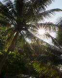 Słońca throug olśniewający baldachimy kokosowe palmy przy a Fotografia Stock