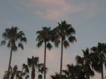 Słońca ustalony drzewko palmowe obrazy stock