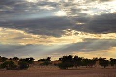 Słońce łama przez chmur nad Auob rzecznym łóżkiem, Kgalagadi Transfrontier park narodowy, Południowa Afryka Zdjęcie Stock
