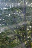 słońce świateł mijania Fotografia Royalty Free