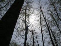 słońce fotografia stock
