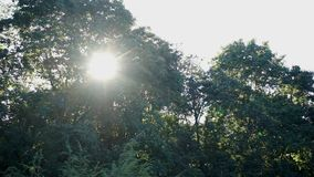 Słońce błyszczy przez drzew zbiory wideo