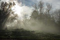 Słońce błyszczy przez gęstej mgły i drzew w wczesnym poranku Las obrazy stock