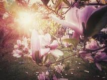 Słońce błyszczy przez kwiatów Obrazy Royalty Free