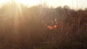 Słońce błyszczy przez ogienia i dymu, palący suchej trawy i krzaków w wczesnej wiośnie lub opóźnionym spadku zbiory wideo