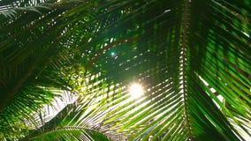 S?o?ce B?yszczy Trought Paln li?cie Egzotyczna Tropikalna natura zbiory wideo