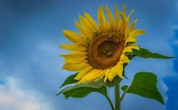 Słońce bogini Obrazy Royalty Free