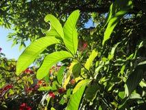 Słońce i liście Fotografia Royalty Free