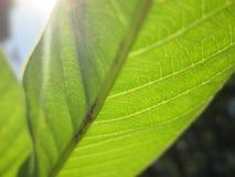 Słońce i liście Zdjęcia Stock