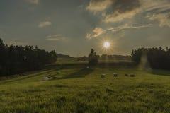 Słońce i pole w wieczór w Slavkovsky les parku narodowym Obraz Stock