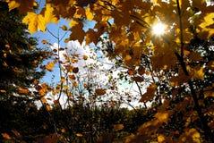 słońce jesieni Fotografia Royalty Free