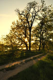 Słońce jest idzie w dół za drzewem Obraz Stock