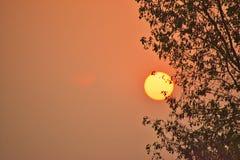 Słońce jest ustawiać drzewo fotografia royalty free