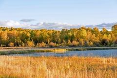 Słońce jezioro i Biała brzoza w jesieni zdjęcia royalty free