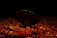 Słońce kapeluszowa Biała kukurudza zasadzająca na kukurudzy, fedrunek kukurydzani rolnicy zdjęcia stock