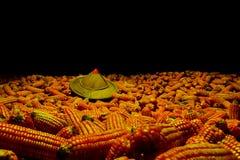 Słońce kapeluszowa Biała kukurudza zasadzająca na kukurudzy, fedrunek kukurydzani rolnicy fotografia stock