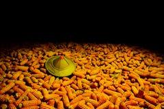 Słońce kapeluszowa Biała kukurudza zasadzająca na kukurudzy, fedrunek kukurydzani rolnicy obraz royalty free