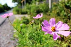 Słońce kwiat mówi ty cześć Fotografia Royalty Free